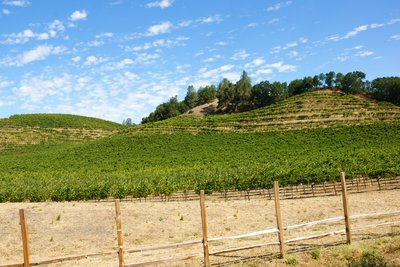 Vineyards are an ever present sight in Napa Valley, California