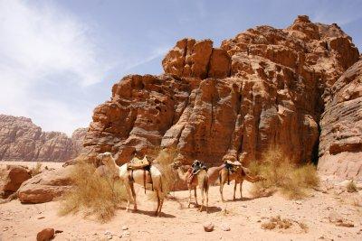 Camel parking spot