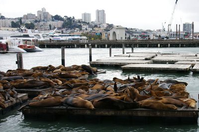 Pier 39 with lounging sea lions, San Francisco