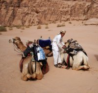 Yusuf preparing our camels for our last day in the Wadi Rum desert