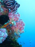 large_Bajo_Dive_Trip__12_.jpg
