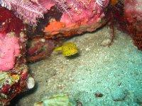 large_Bajo_Dive_Trip__24_.jpg