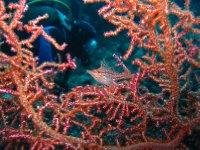 large_Bajo_Dive_Trip__41_.jpg