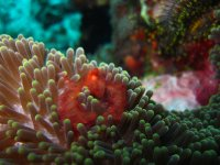 large_Bajo_Dive_Trip__46_.jpg