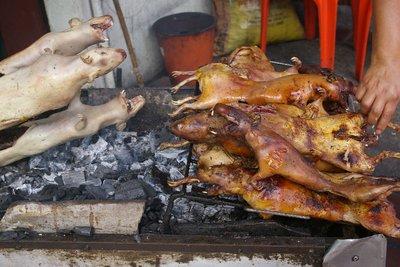 Guinea Pigs, Yum Yum!