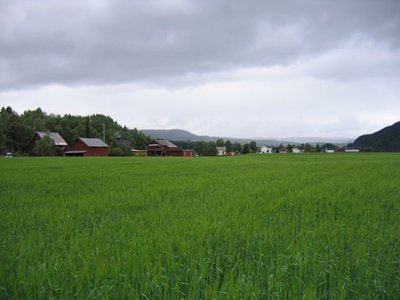 Norwegian fields