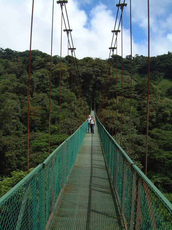 Hanging treetop bridge