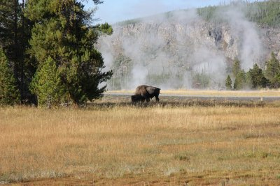 Yellowstone 139