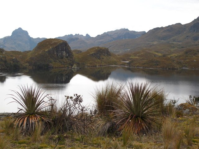 Paramo