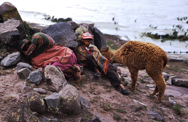 Children and alpaca in Sillustani