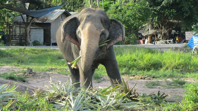 Elephant village random stop