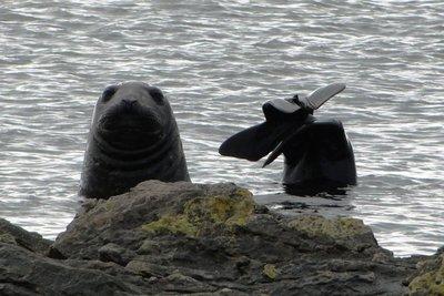 Elephant_Seals__3_.jpg