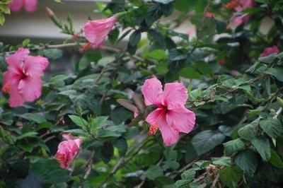 Hummingbird__2_.jpg