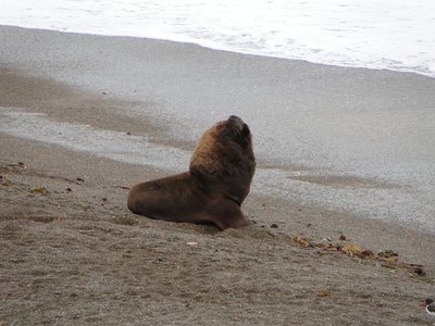 Punta_Norte_Sea_Lions__2_.jpg