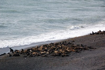 Punta_Norte_Sea_Lions__4_.jpg