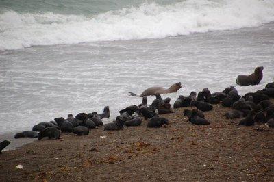 Punta_Norte_Sea_Lions__5_.jpg