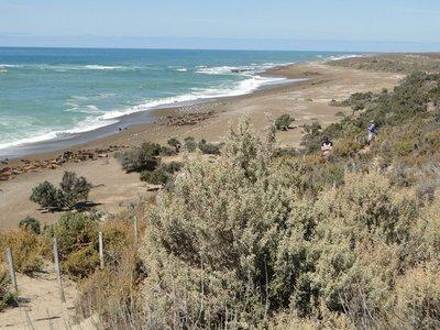 Punta_Norte_Sea_Lions__9_.jpg