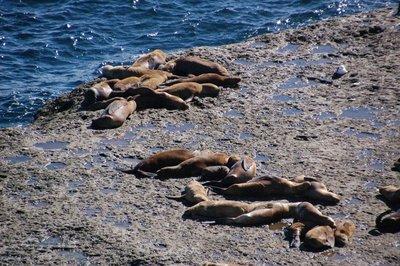 Punta_Pira..a_Lions__3_.jpg