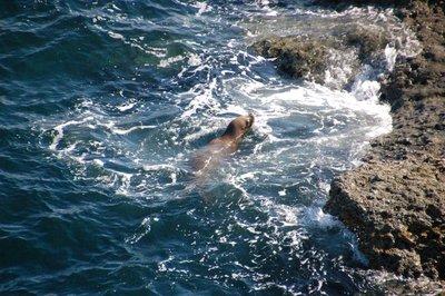 Punta_Pira..a_Lions__4_.jpg