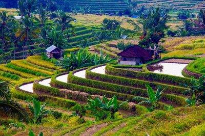 Jatiwulah rice terraces 2