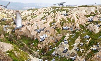 Pigeon Valley 2