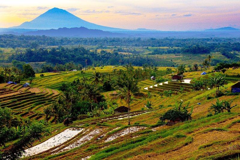 Jatiwulah rice terraces 1