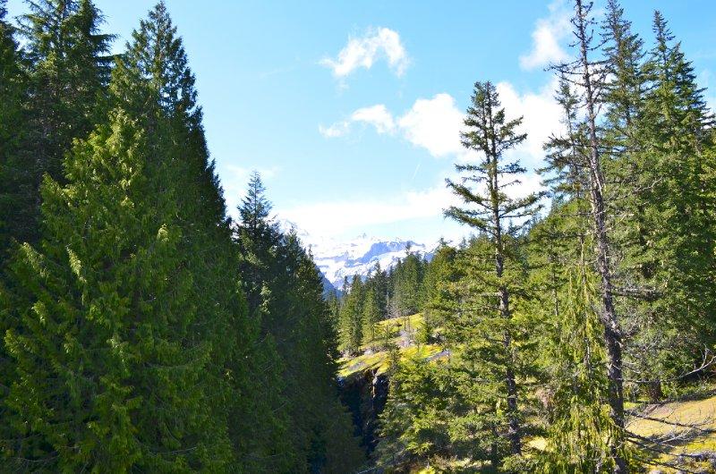 Mount Rainier National Park - Box Canyon