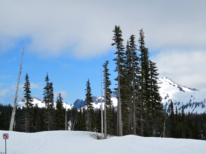 Mount Rainier National Park - Paradise