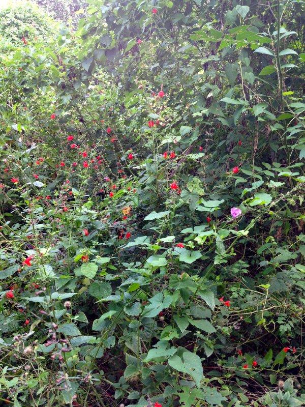 Houston Arboretum