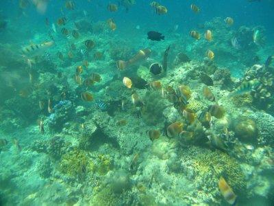 Gilli Air snorkling