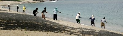 pulling in the net - sengiggi beach - lombok