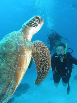 Swimming with the turtle - it's real!