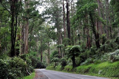The road to Monbulk