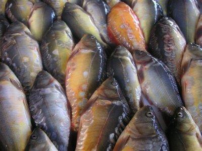 carpes au marché d Antsirabe