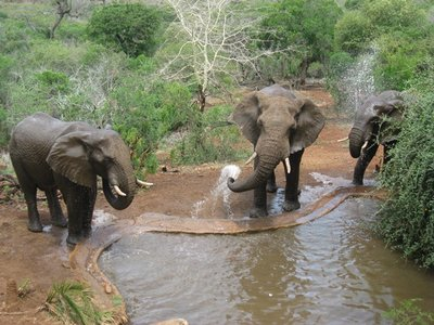 2-14.103 Thanda elephants saying goodby