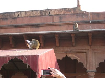 3-2.57a Monkeys at Taj Mahal