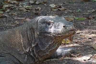 4-28r (17) Dragon close-up
