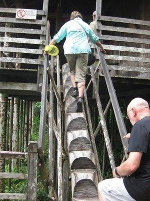 4-23 (49) Orang Ulu  log steps