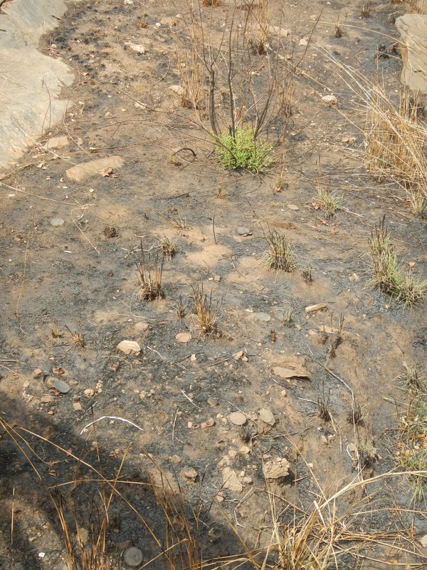 Spot The Landmine