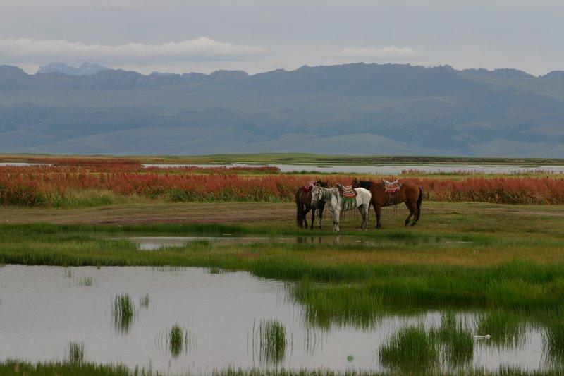 Swan Lake, Bayinbuluk