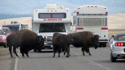 bison_road.jpg