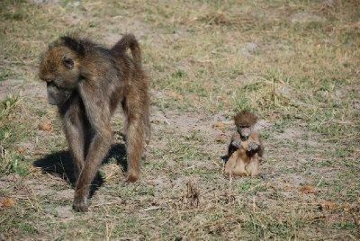 Monkey family at Chobe Riverfront