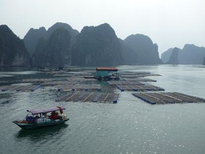 Fish farming amongst the limestone outcrops