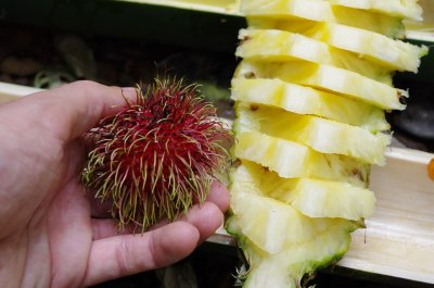 The afters, rambutan and pineapple