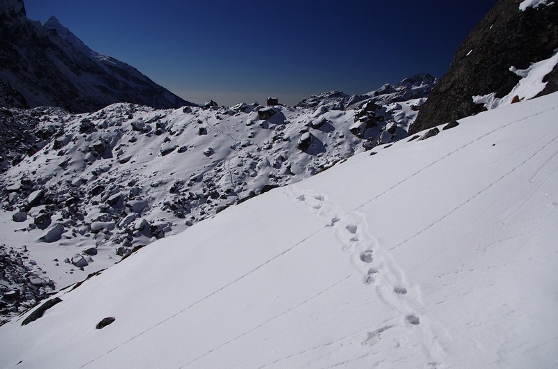 Tracks of a snow leopard on the Goecha La in Sikkim
