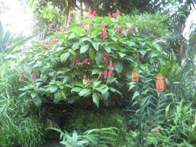 Missouri Botanical Garden 21