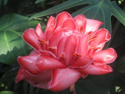 Missouri Botanical Garden 19