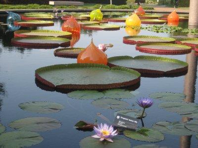 Missouri Botanical Garden 13