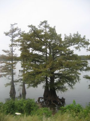 Moon Lake Tree 3