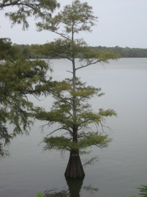 Moon Lake Tree 2